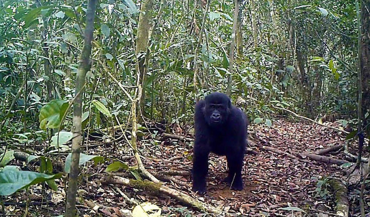 Cameroon Decides to Save Last Intact Forest in Central Africa