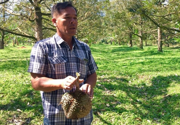 Photo: Farmer Sittipong Yanaso at his durian farm. Credit: CCDKM.