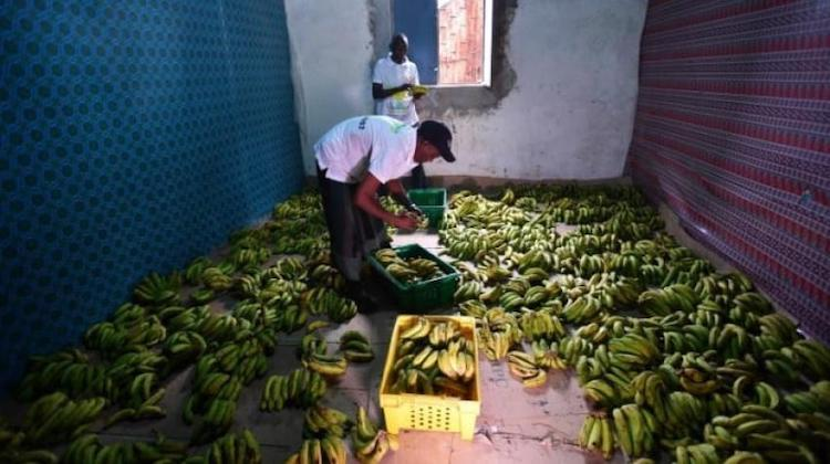 Photo: Employees prepare bananas to be distributed in Mogadishu. Allan Atulinda/UN