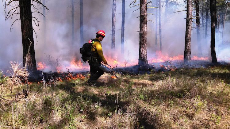 Photo: inland Northwest National Wildlife Refuge Fire Management staff conducted a fifty-acre prescribed fire at Turnbull National Wildlife Refuge earlier this spring. Credit: Ken Meinhart, USFWS. Public Domain.