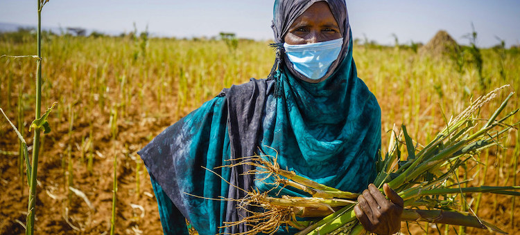 Photo: Food systems in Africa have been adversely impacted by climate-induced shocks, conflicts and most recently, COVID-19. © FAO/Petterik Wiggers