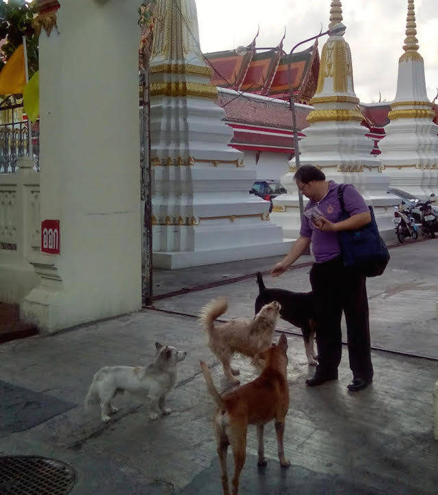 A devotee feeding animals in the morning in front of a Buddhist temple in Bangkok. | Credit: Kalinga Seneviratne