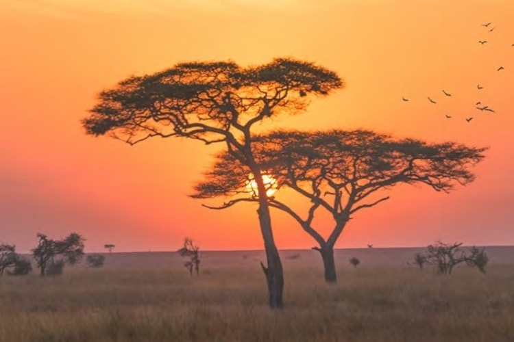 Photo: A landscape in the Serengeti national park, Tanzania. Credit: iStock. Source: ACP-EU NDRR Activity Report 2017-2018.