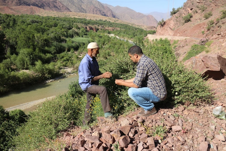 Photo: Abderrahim Ouarghidi (author) discussing with a farmer about varieties of local crop seeds and medicinal plants in the Ouirgane municipality, Marrakech region, Morocco.